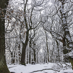 Ecclesall Woods summit in the snow 2