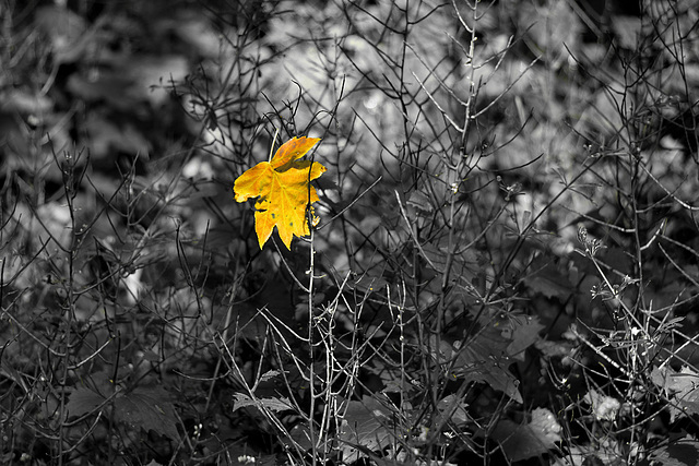 Herbstbeginn - Start of autumn