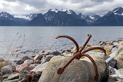 beach_spider