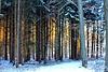 Rendevous - Morgensonne trifft Wald