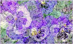 TSC Springtime (When I Grow Old I Shall Wear Purple)