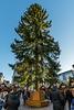 Chemnitzer Weihnachtsbaum 2017 (27 m)