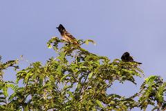 Birds on tree top