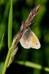 Die Zeit der Schmetterlinge beginnt - The time of butterflies begins