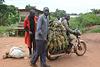 Uganda, Great Pineapple Transport
