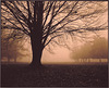 Mist in...Ektalure