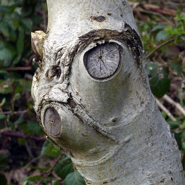 Baum-Hund