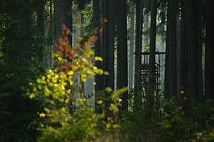 unscharfer Herbst