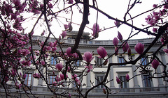 spring in the city - PIP