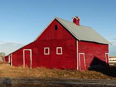 Red barn, High River Christmas Bird Count