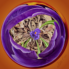 Purple elegance . .