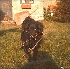 SNOURS mon premier chien (10.06.79 / 01.10.93)