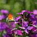 Es wird Frühling im Garten - It's springtime in the garden