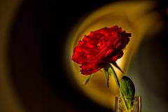 Rose 28/50 : am Rande des Kraters