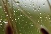 Il Pleut de Nouveau