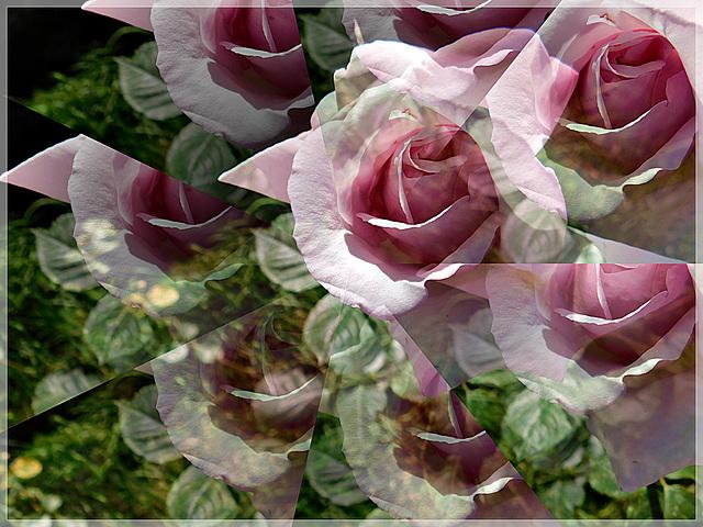 Au jardin avec Photoscape