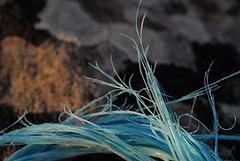 Blue fibres