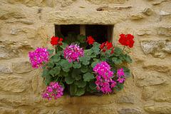 Pierres fleuries !
