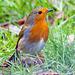 Robin (24)