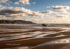Beach pony.