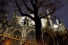 Notre Dame, de Paris...