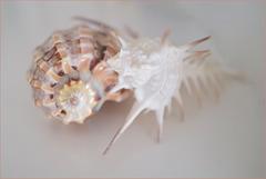 Shells, softness
