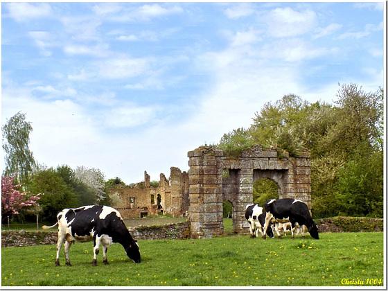 Kühe vor historischem Hintergrund