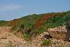 Monte papavero -  Mohnberg