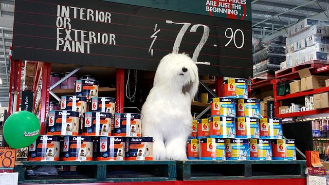 119/365 Dulux dog
