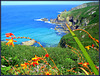 Zennor Coast, Cornwall. On the South West Peninsula Coast Path.