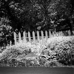 Grandma's Fence