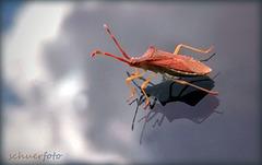 Insekt auf meiner Windschutzscheibe