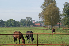 bei Reesdorf (Beelitz)
