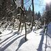 tiefverschneite Winterwelt im Eistobel - (2 PIP)