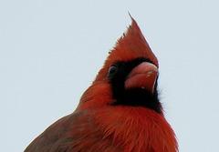 Mr Cardinal ..