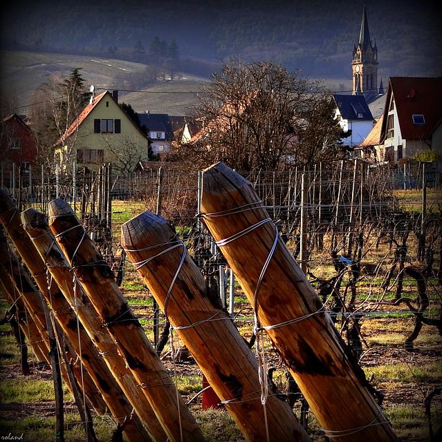 Piquets de vignes....
