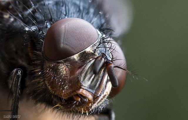 Der Fliege ins Auge geschaut
