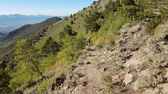 Columbine Creek trail
