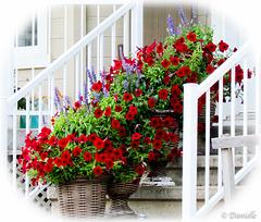 L'escalier en fleurs….