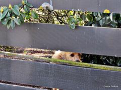 Peeking Through.