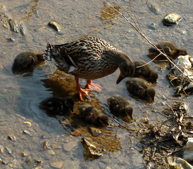 mom and babies