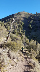 Down the switchbacks on the Columbine Trail