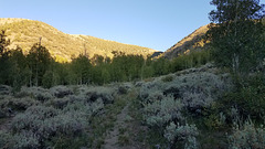 Looking back up the Columbine Trail