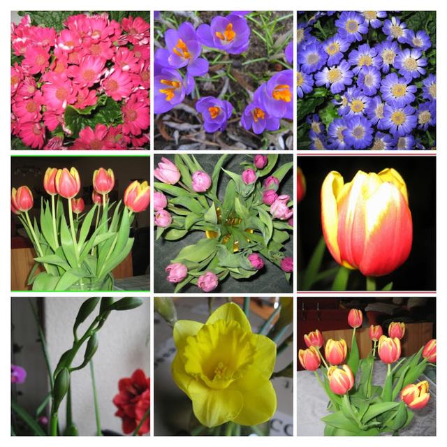 Blumen / Flowers - Indoor / Collage