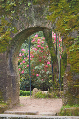 Arch and Flowers