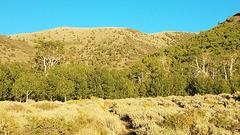 Looking up Columbine Creek trail