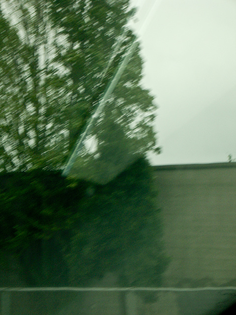 driving portland - abstract tree