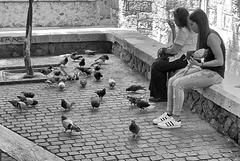 Au milieu des pigeons.