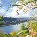 Canaletto-Blick auf Pirna