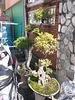 Bonsaïs display / Odomètre bonsaïque